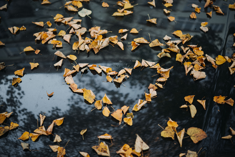 corazon hojaseca